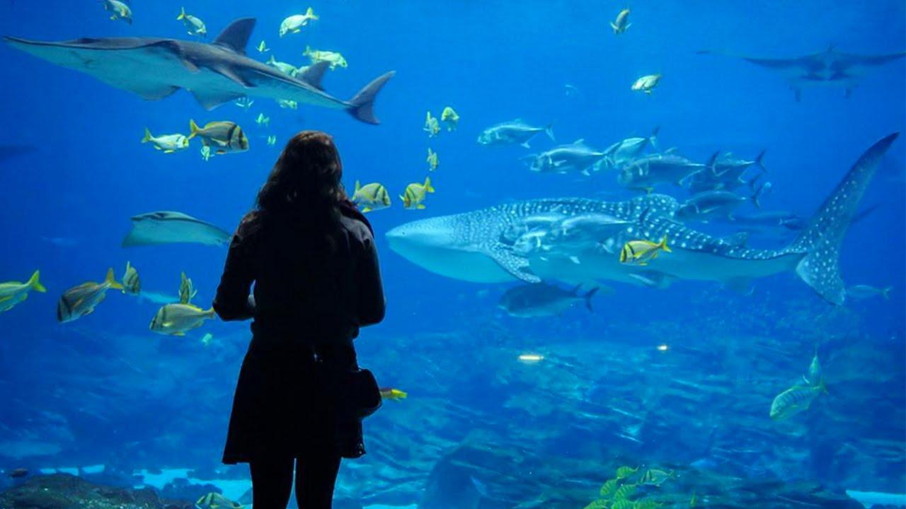 Best Aquarium In The United States Youtube