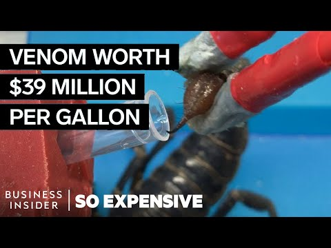 Why Scorpion Venom Is So Expensive