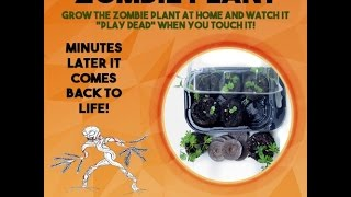 Grow The Zombie Plant