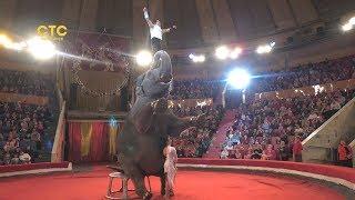 Индийские слоны приехали в Челябинск!