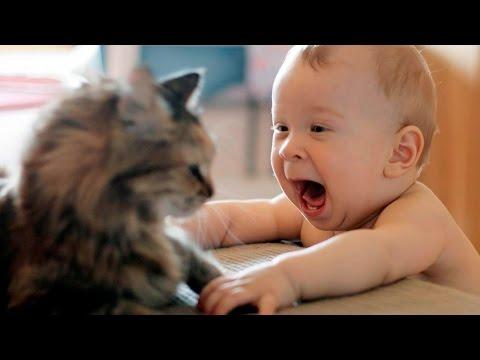 Дети и кошки приколы - Funny cats and babies