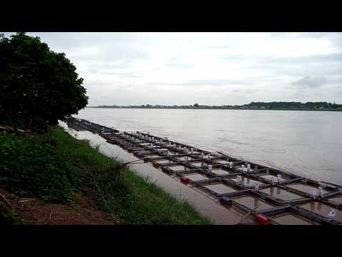 Tilapia Fish Farm, Mekong River Vientiane Laos