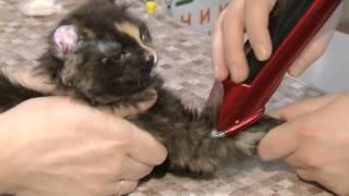 что делать, если нашли котёнка(СМОТРИТЕ ПРОГРАММУ