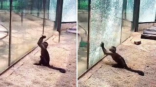 15 Times Where The Glass Was Almost Not Strong Enough #2