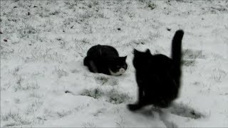 Katzen spielen im Schnee  Cats playing in snow Kittens winter outdoor fun