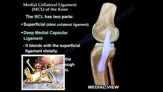 Medial Collateral Ligament Of The Knee - Everything You Need To Know - Dr. Nabil Ebraheim