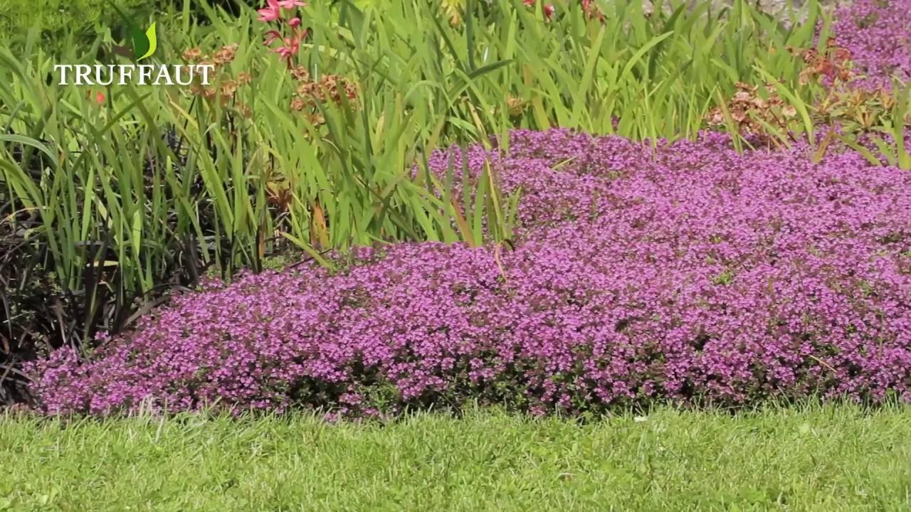 comment liminer les mauvaises herbes dans un massif. Black Bedroom Furniture Sets. Home Design Ideas