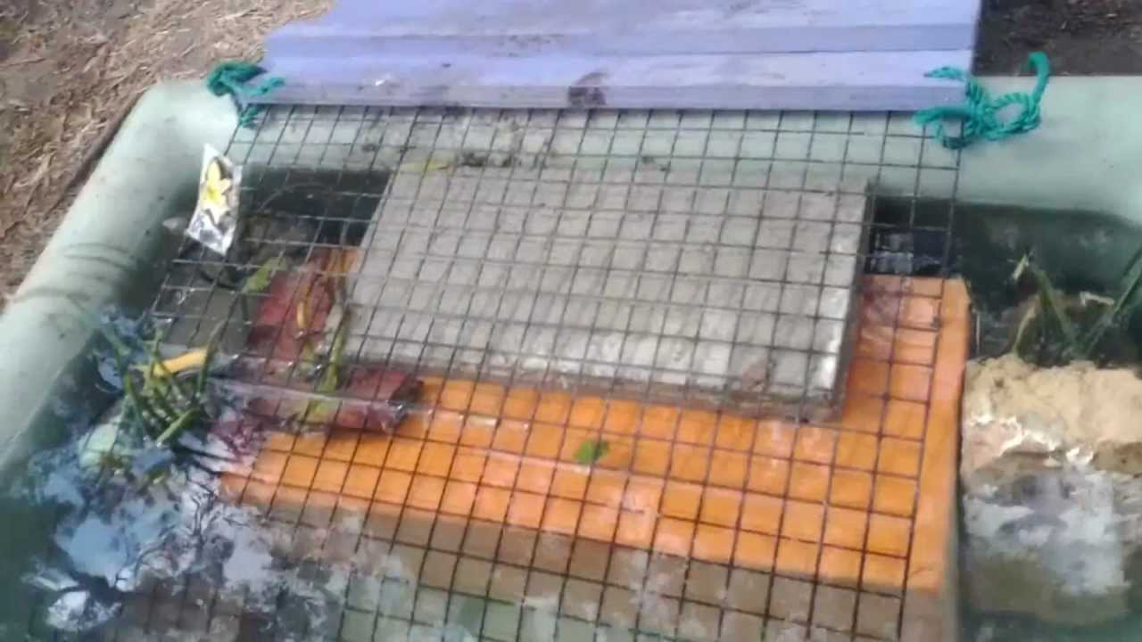 Duck Ramp For Pond To Get In And Out Youtube