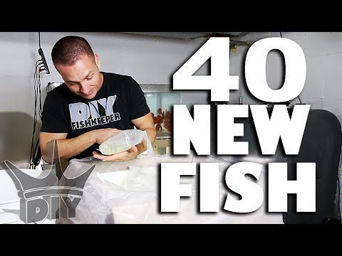 40 NEW AQUARIUM FISH