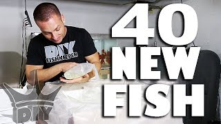 40 NEW AQUARIUM FISH