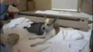 Dogs Waking Up After Surgery
