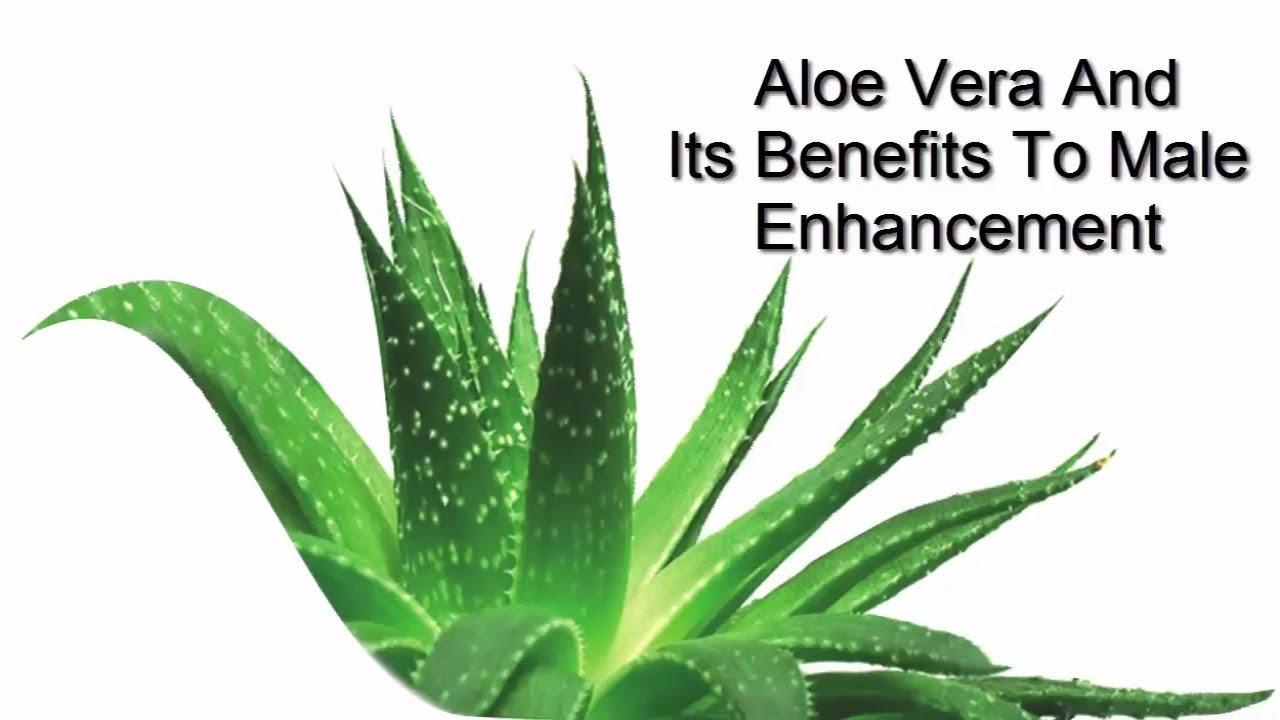 how to keep aloe vera