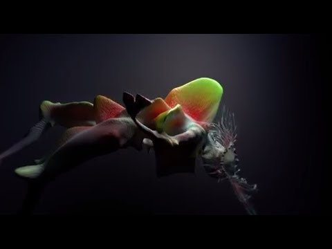 Смотреть клип Björk - Tabula Rasa