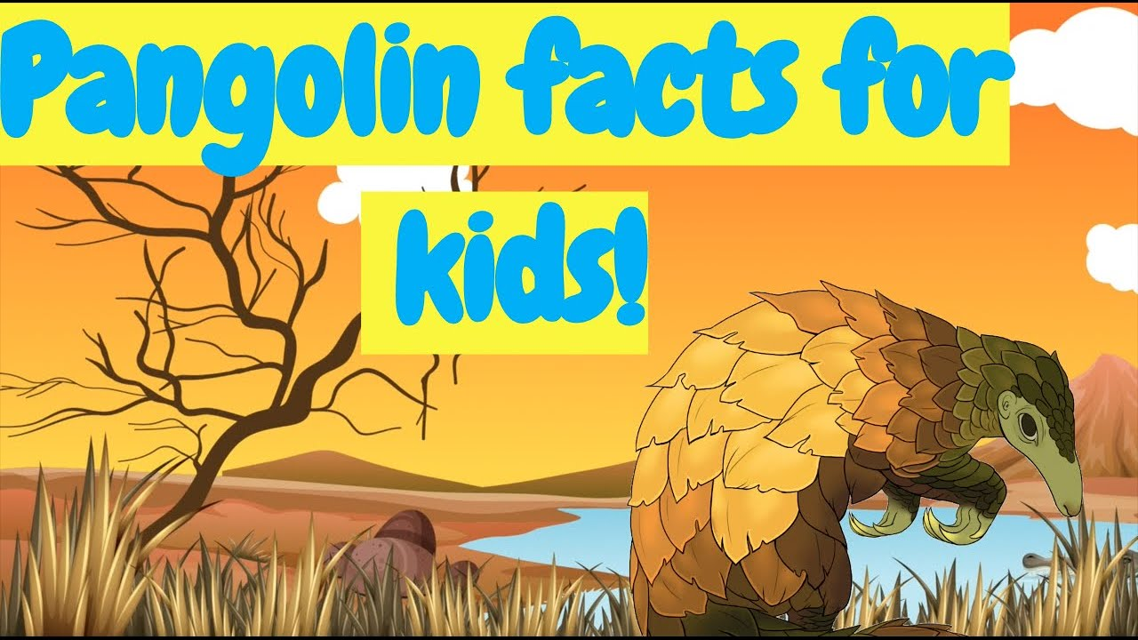 Pangolin facts for kids