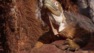 Unique Wildlife of Galápagos