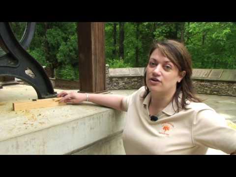 Carpenter Bees - Millie Davenport