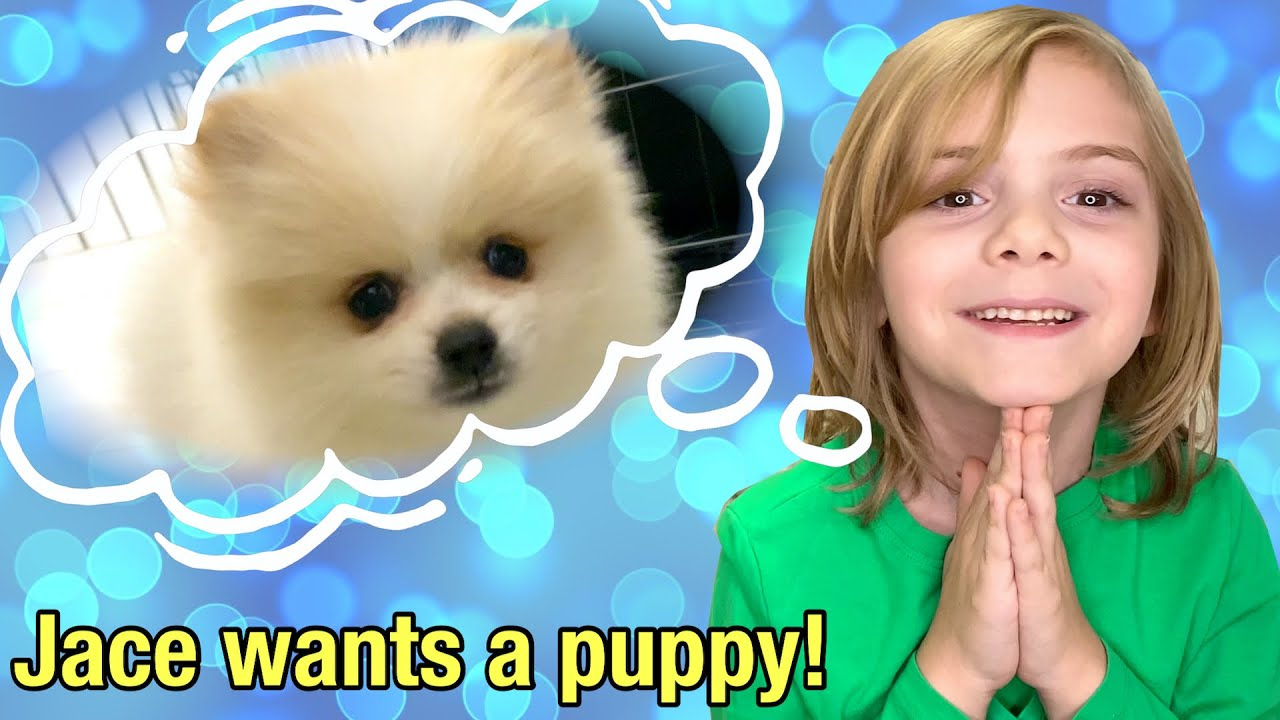 Jace really wants a real puppy dog!