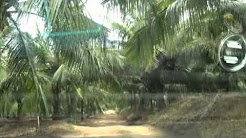 Coconut farm for sale in Pollachi Ph+91 98430 94200,+91 99444 24331.