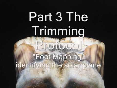 foot trimming 0001