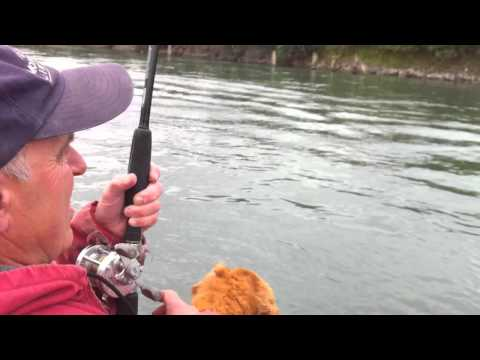 Skagit River King