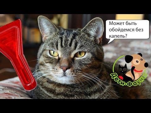 Вопрос: Как оказать помощь кошке при отравлении?