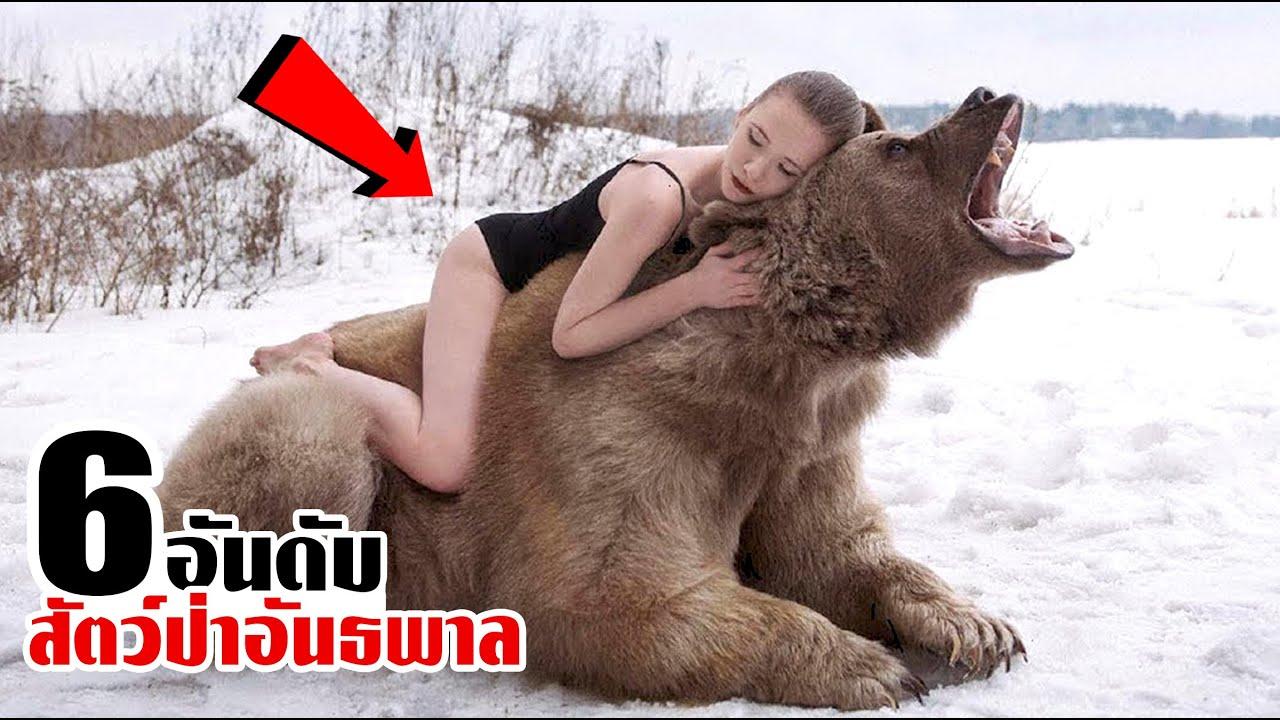 6 สัตว์ป่าอันธพาล ที่สาวบางคนนิยมเลี้ยง! (ใจกล้าจริงๆ)