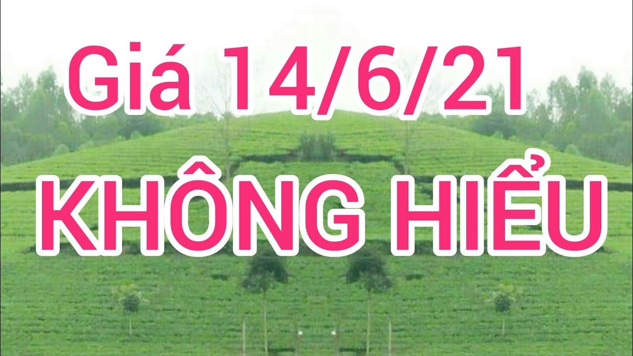Giá heo hơi (lợn hơi) ngày 14/6/21. Thái Lan bác bỏ heo Thái vào Việt Nam bị nhiễm dịch tả châu phi