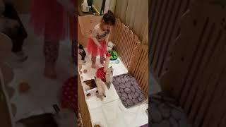 """Питомник """"Neva Crystal"""", сибирские невские маскарадные котята. Украина, г.Киев"""