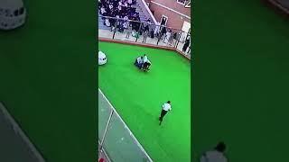 """بالفيديو.. كلب """"متهور"""" يفسد أحد عروض الجنادرية ويهاجم مدربا بالجمارك!    صحيفة الأحساء نيوز"""