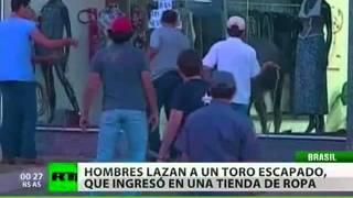 Un toro ingresa en una tienda de ropa en Brasil