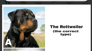 Rottweiler Dog Breed watch this video