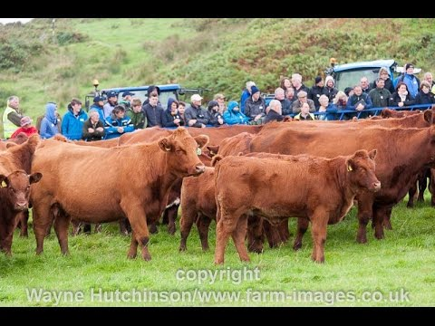 Luing cattle open day 2016 youtube luing cattle open day 2016 publicscrutiny Images
