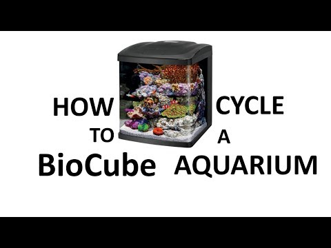 How To Cycle A BioCube Aquarium