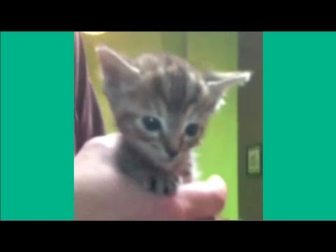 Cute short video compilation from the vine app – Best Videos on Vine