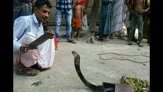 Amazing snake dance show by snake charmer ।। Snake charming show in village ।। Amazing snake playing