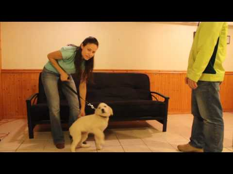 Dog Training; stop your dog from jumping on people!