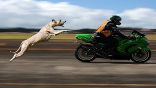 Why does the dog run behind the bike? | problem solve