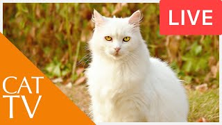 Videos for Cats! Entertainment for Cats with Relaxing Music