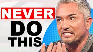 Reprogramming Humans to Train Dogs | Cesar Millan on TJHS Ep. 162 (FULL)