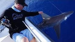 My SHARK Week 2018 | SHARKS Anna Maria Island Florida