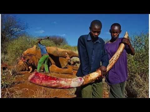 Illegal poaching