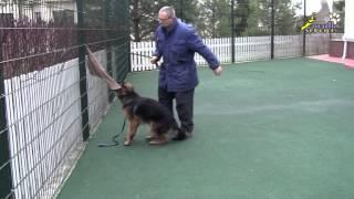 Дрессировка собак, моделирование сложной ситуации