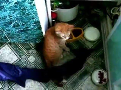 Пинчер и кот