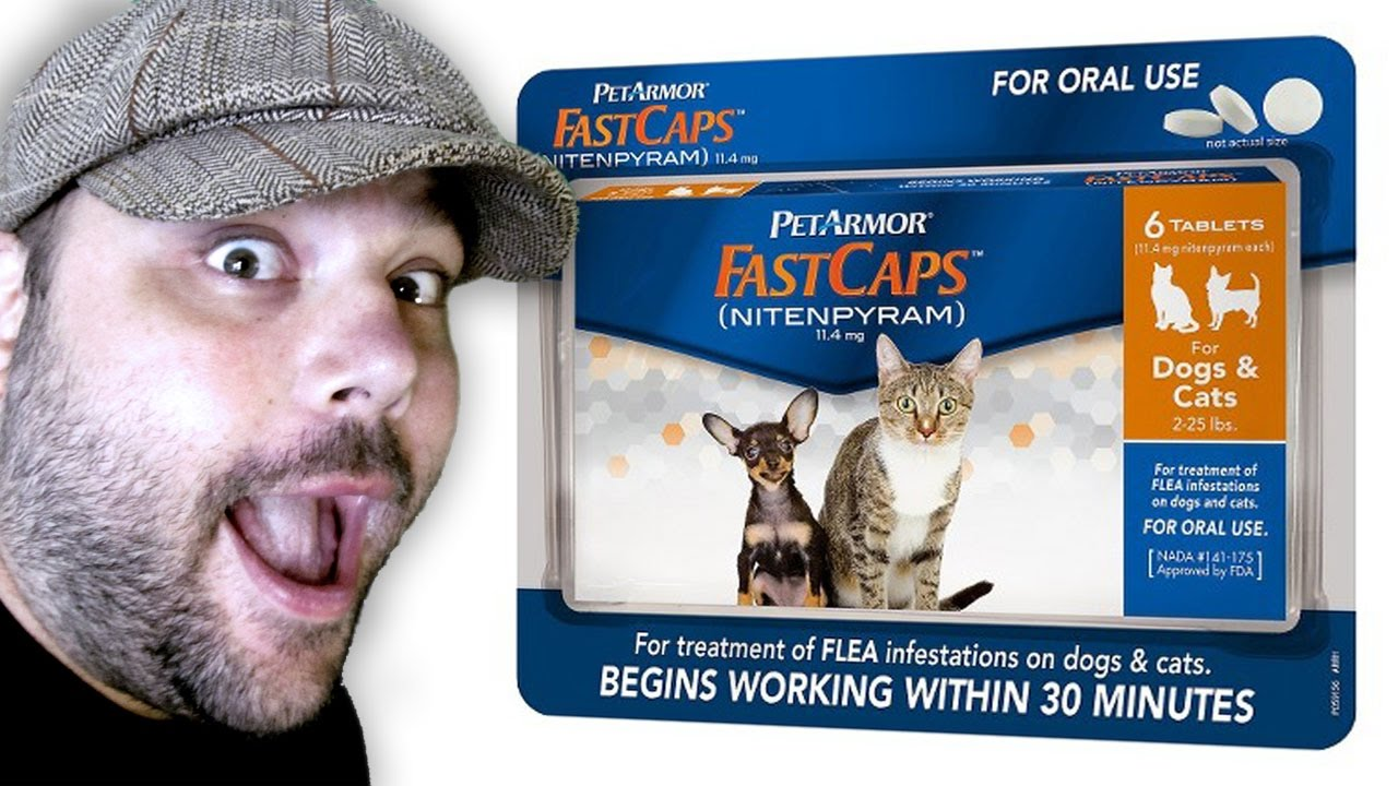 PetArmor FastCaps - (Best) Flea Pills for Cats Review