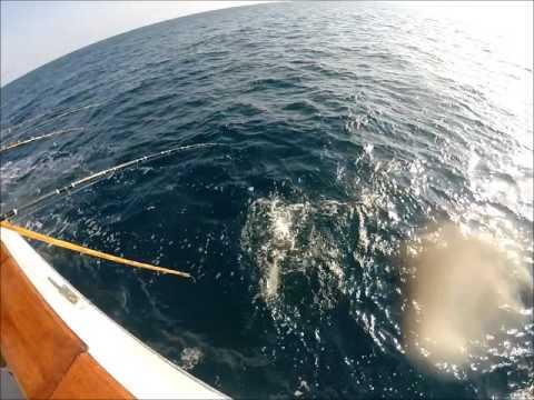 Native sun sportfishing 22nd street landing 5 24 15 for 22nd street landing fish report