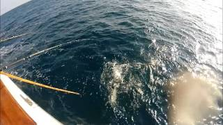 Native Sun Sportfishing 22nd Street Landing...5-24-15