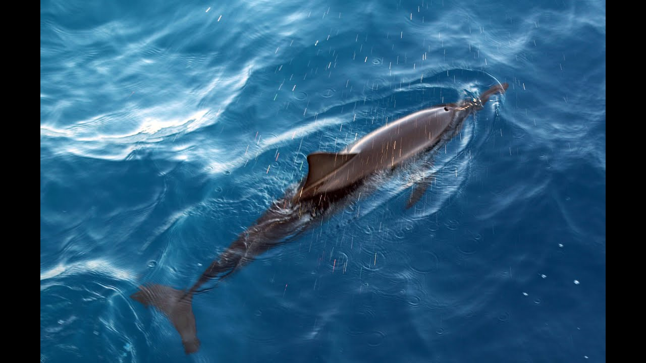 Dolphin Tour In Maldives - Dolphins Chasing The Ship ...