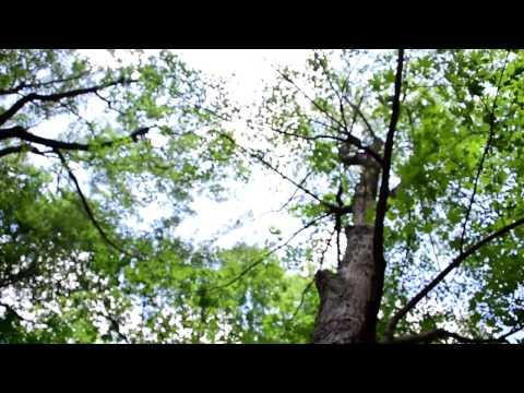 De mémoire d'arbre - Contes, Musique et poésie par Marijo Crenn & Merwan Djane