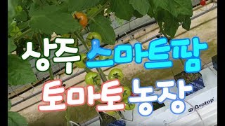 토마토 스마트팜 농장 체험 현장 영상