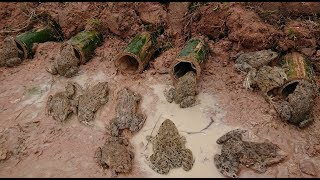Amazing 2 Boys Make Deep Hole Trap Using Bamboo To Catch Frog